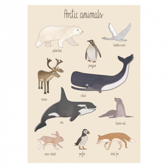 Poster - Animaux de l'Arctique
