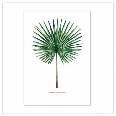Affiche - Fan Palm