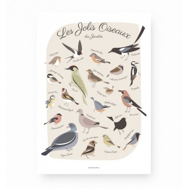 Affiche - Les jolis oiseaux du jardin