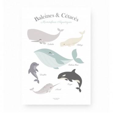 Affiche - Baleines & Cétacés