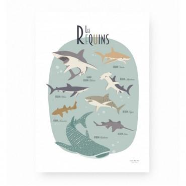 Affiche - Les requins