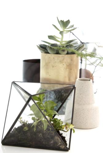 Intérieur plantes vertes